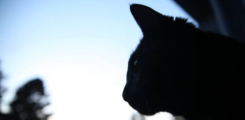 Pensive Jackson